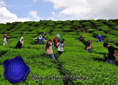 cameron valley tea house, Tahun Melawat Malaysia 2014, #VMY2014