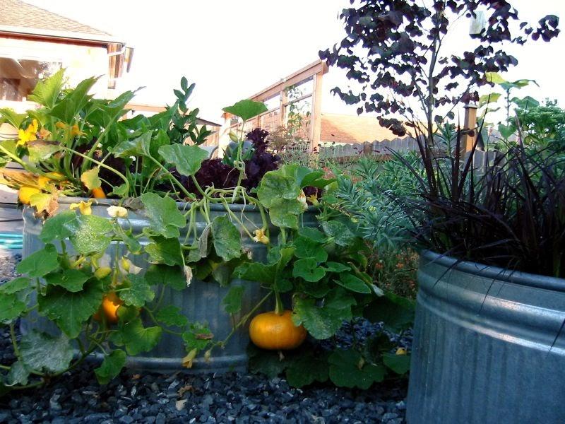 container vegetable gardening two men and a little farm galvanized water tank trough