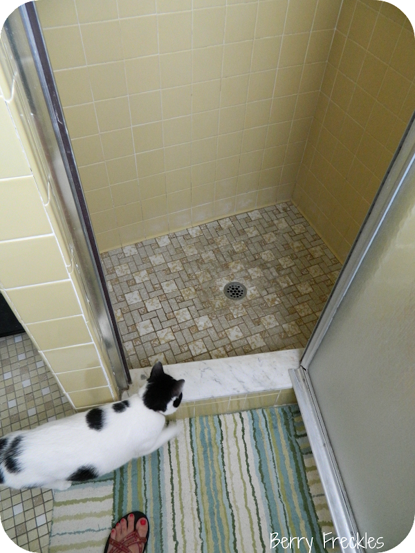 Opening the shower door, you can see the teeny tiny enclosed area. title=
