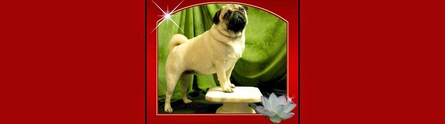 Lotus Blossom Pug