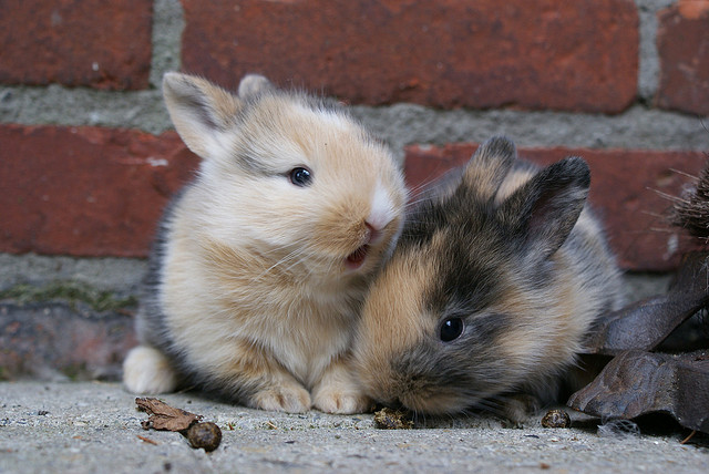 baby bunny pictures