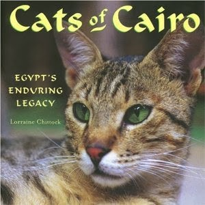Cats Of Cairo by Lorraine Chittock