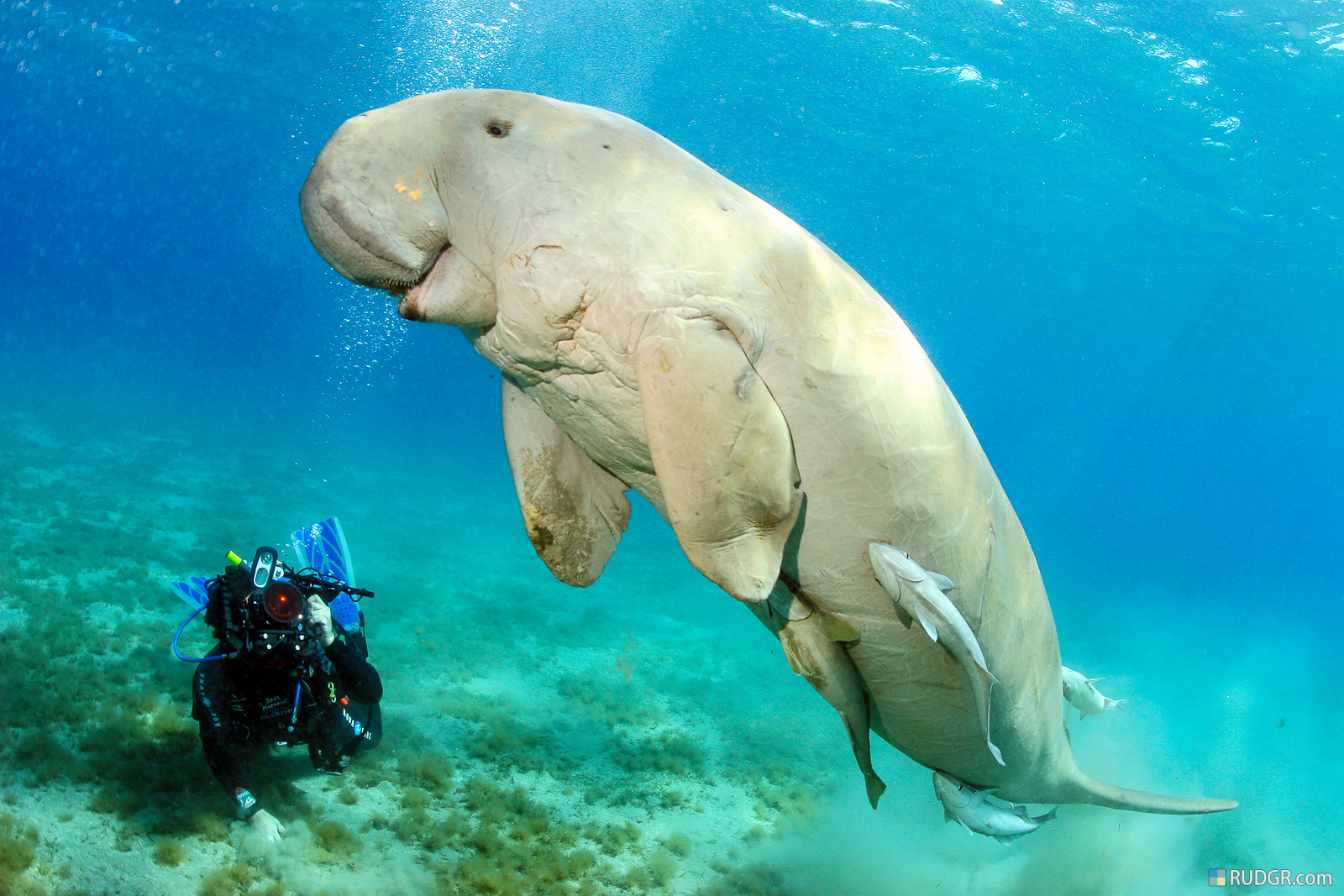 Revolusi Ilmiah - Dugong