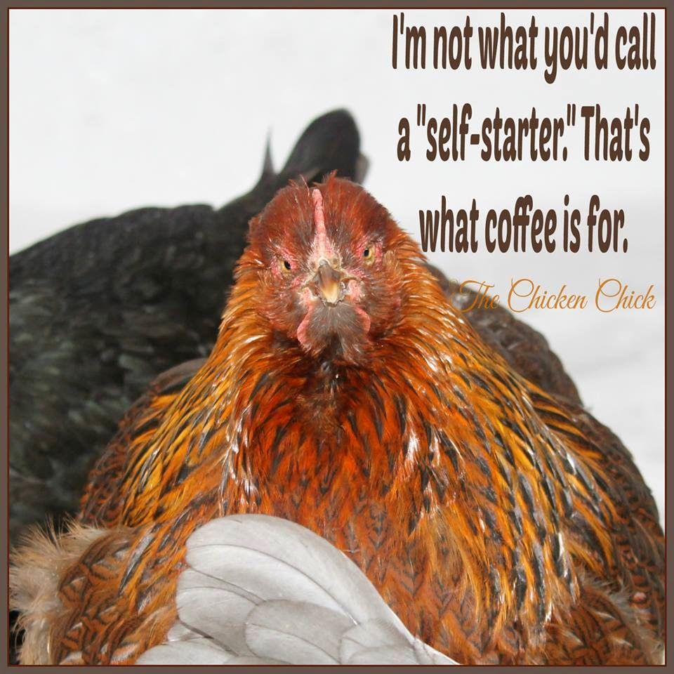 "I'm not what you'd call a ""self-starter."" That's what coffee is for."