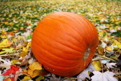 Custody of The Pumpkin