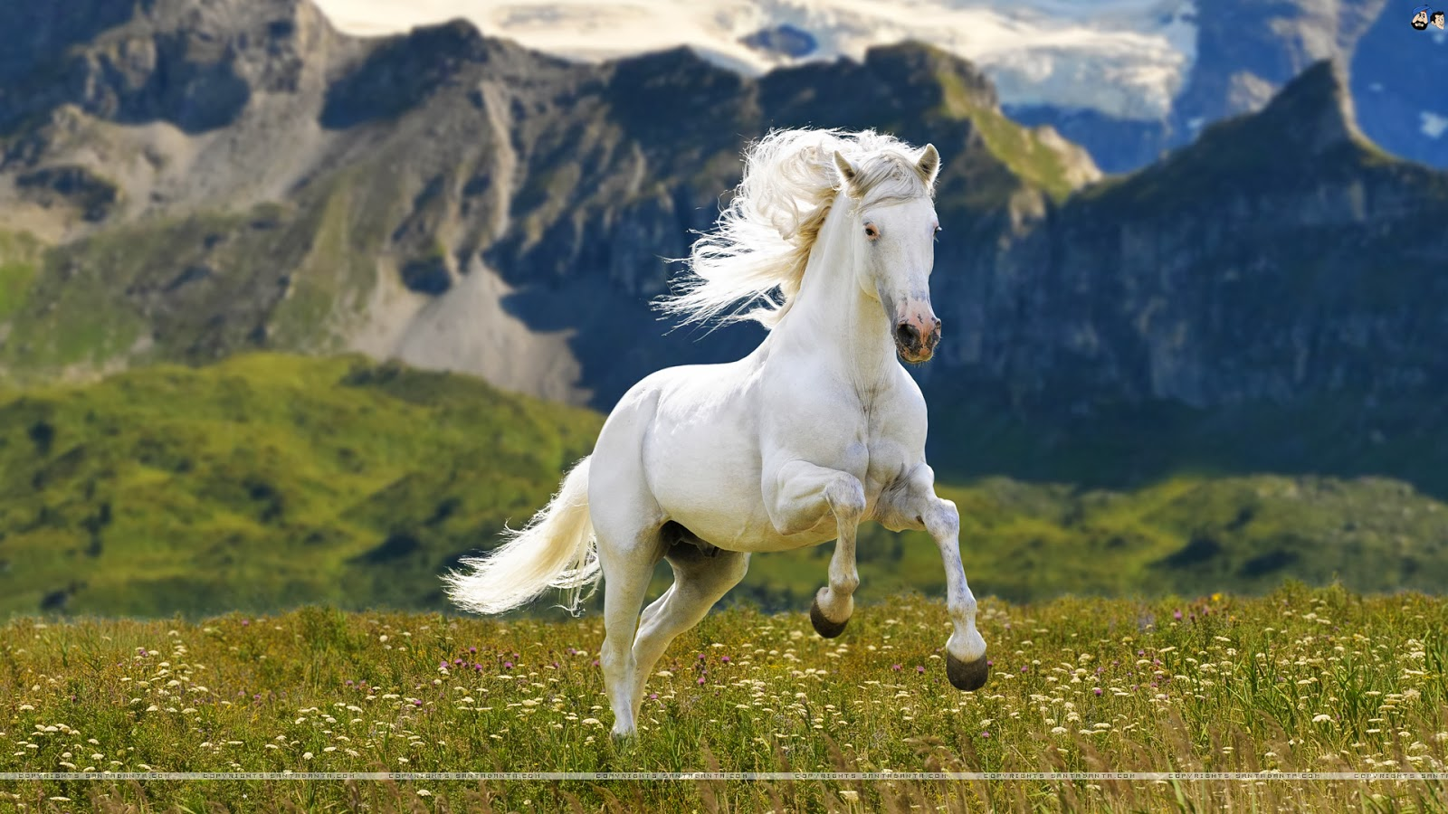 Group Of White Horse Free Hd