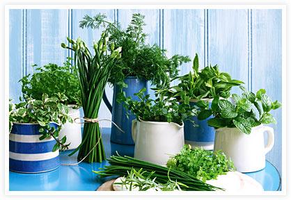Muito Verde em Casa – Ervas Aromáticas