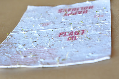 Holiday Cards on Seeded Paper