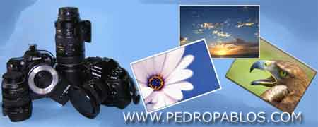 PEDRO PABLOS - Imágenes
