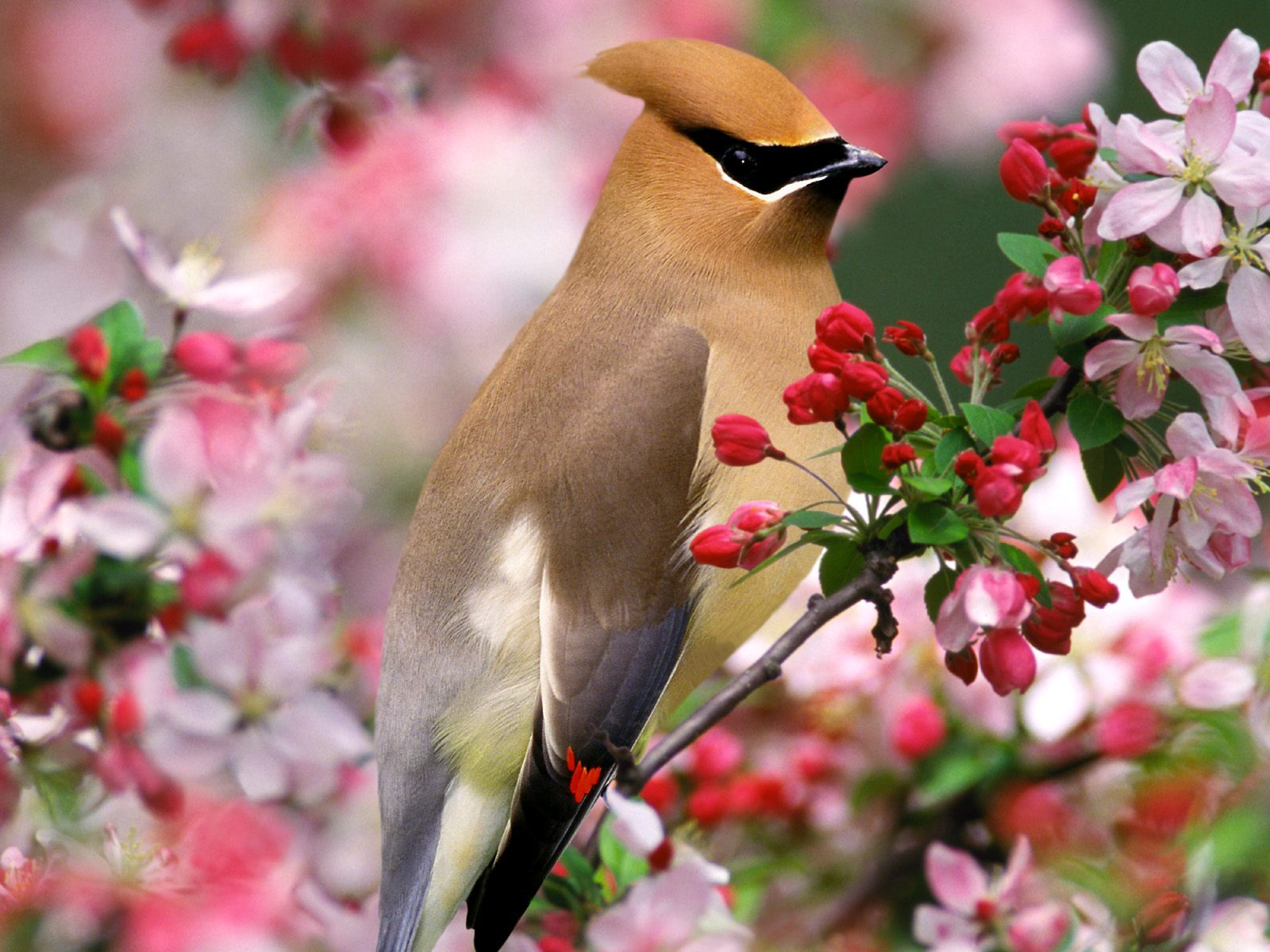 flowers for flower lovers.: flowers desktop wallpapers with small birds.
