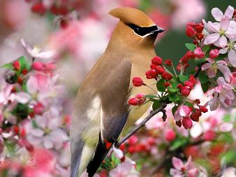 #4 Spectacular Flowers Images for Desktop