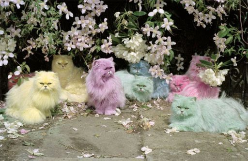 pastel colors, mint,pink,baby pink,baby blue,pastels,cat,pastel cats