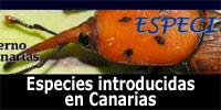 Aves exóticas en Canarias