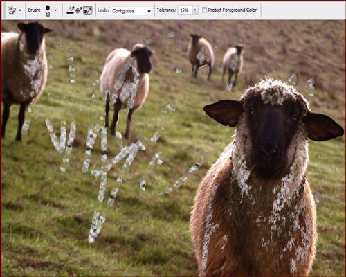 Arka plan silgisi , photoshop , kuzu resimi ,pixel silme ,pixel yok etme