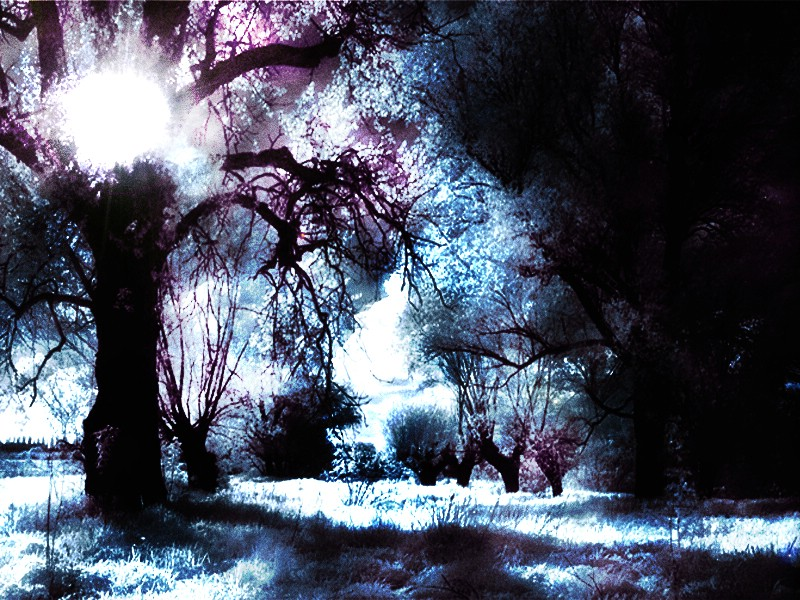 Depth Of The Forest Dark Gothic Wallpaper