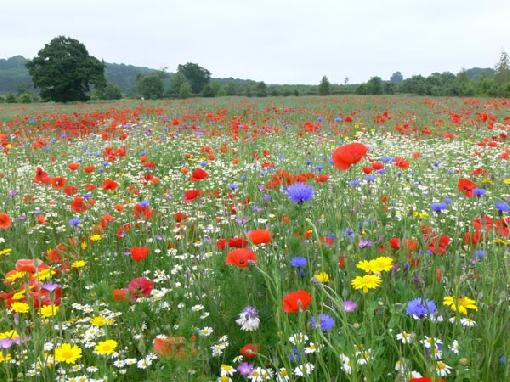 flores coloridas jardim:vejo flores coloridas no campo desabrochando no verde jardim da vida