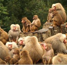 Uniquely Animals Haiwan Yang Hidup Berkumpulan