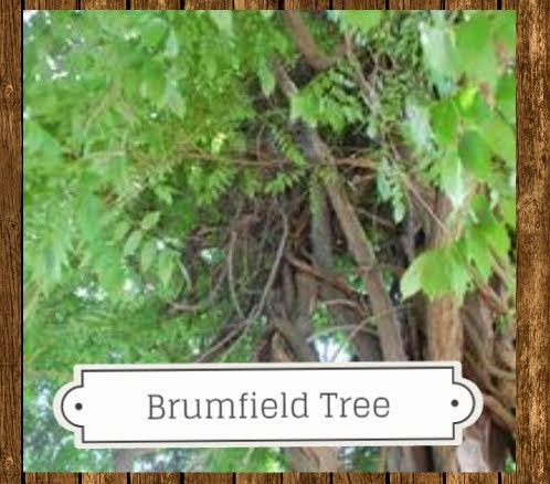 Brumfield Family Tree