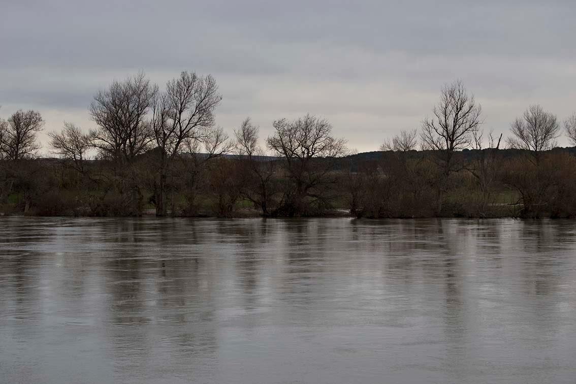 Ebro novillas sotos del ebro