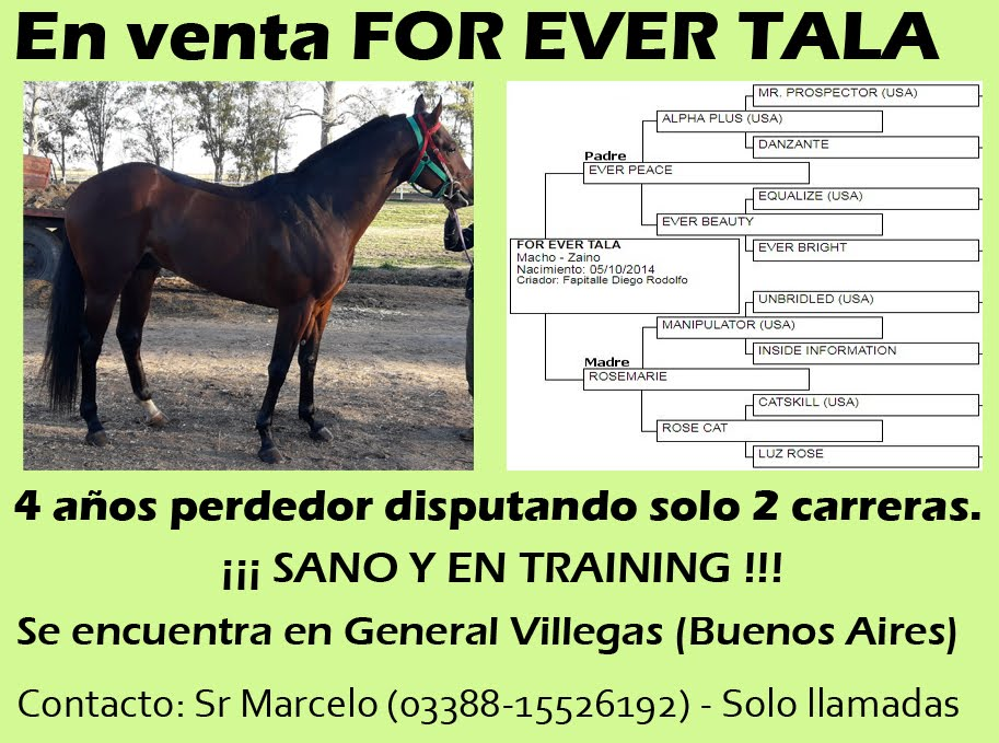 VENTA FOR EVER TALA