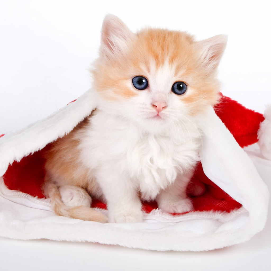 Funny & Cute Cats Santa Cat