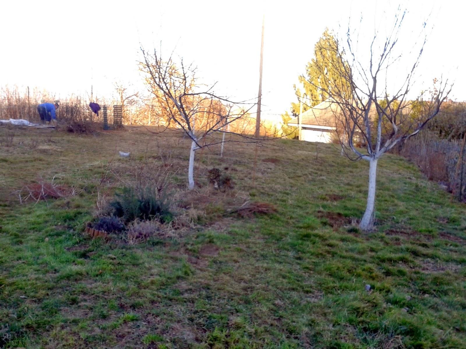L 39 orto e altri maestri cure per gli alberi da frutto for Piccoli alberi da frutto