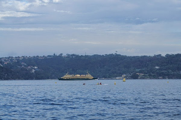 Manly ferry passes Shark Bay, kayakers on Sydney Harbour in the foreground.