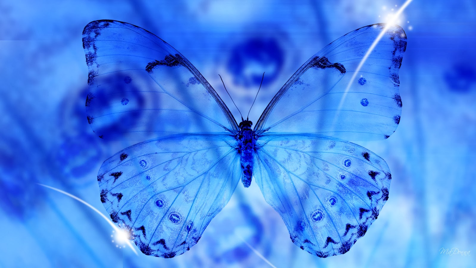 Blue Butterfly 3d Free Desktop Wallpapers Beautiful Desktop