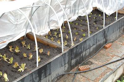 Lesurvivaliste le jardin sur lev - Jardin sureleve creation ...