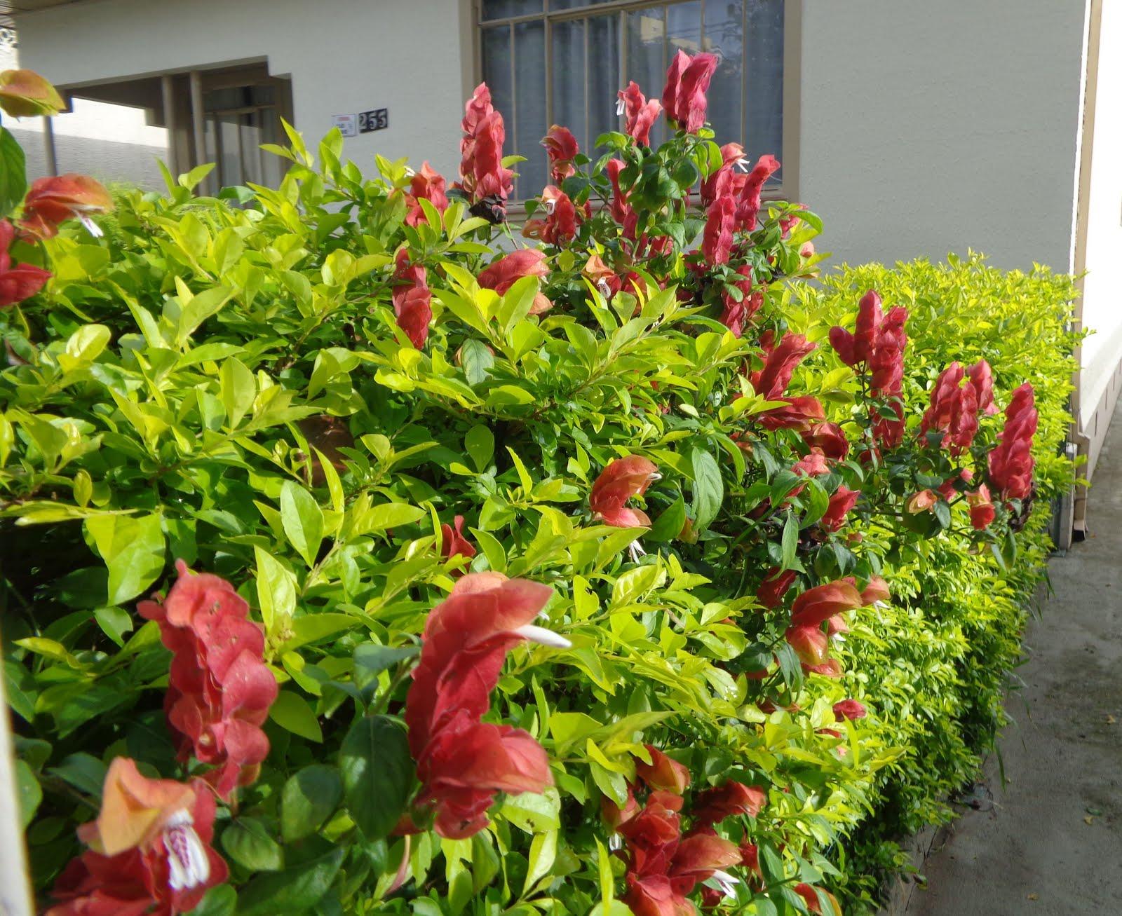 flor em Curitiba