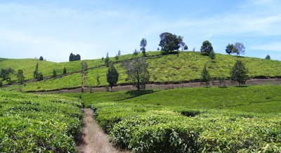 Berwisata di Kebun Teh, www.kebuntehwonosari.blogspot.com, 081803838630