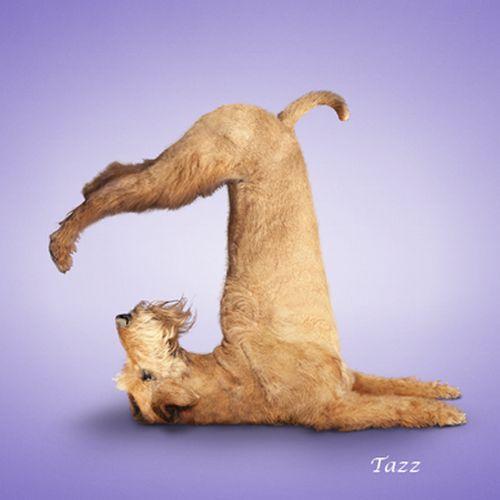 So sehen photogeshoppte hunde-models aus: