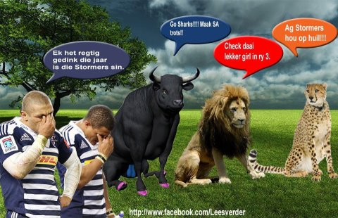 funny blue bull rugby images public domain