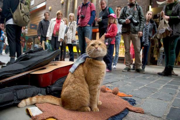 http://2.bp.blogspot.com/-Urdif8PLnG8/UyhroA-5s1I/AAAAAAAACyw/PUhzBJ0VnsI/s1600/Street-Cat-Bob-2016464.png