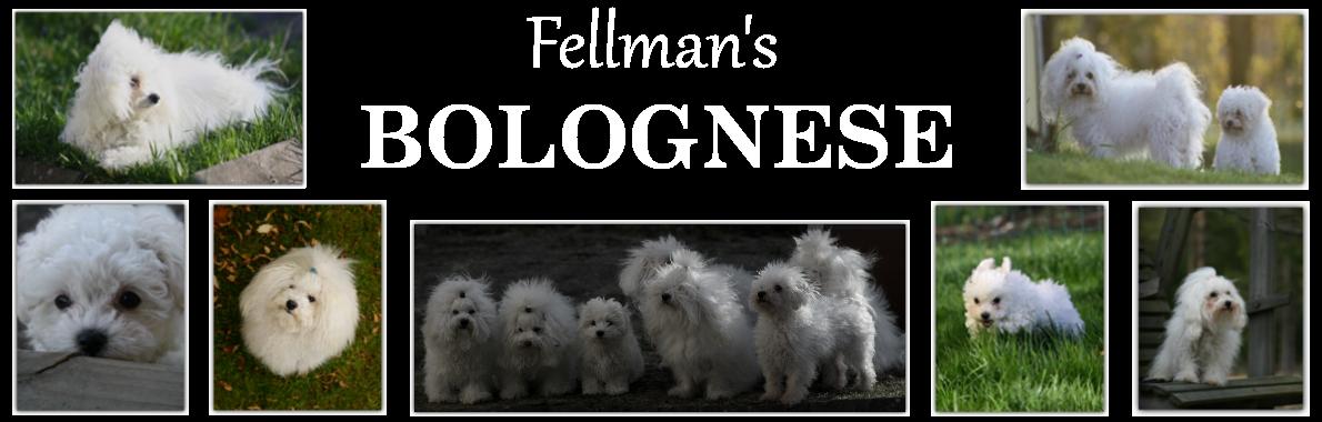 Fellman's Bolognese