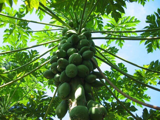 ranweli spice garden kandy sri lanka