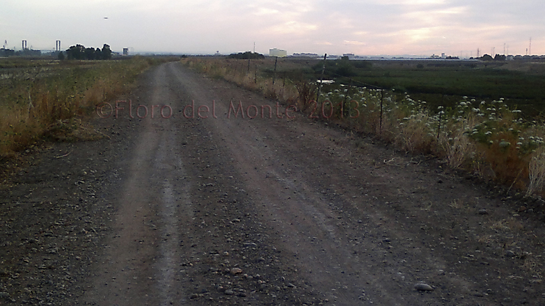 Florodelmonte sevilla sanlucar de barrameda for Villas tortuga celestino