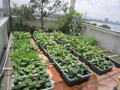 Vườn rau xanh tại nhà