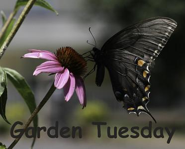 Garden Tuesday