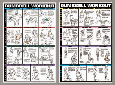 Exercises chart for mendumbbell workout professional fitness