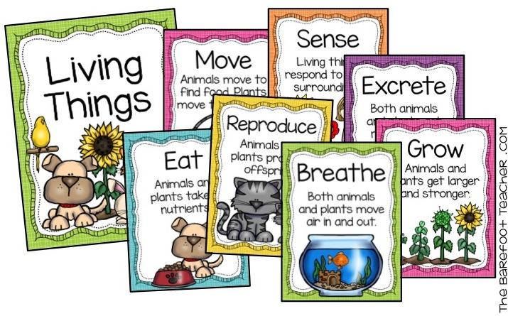 Living Things Interactive Notebook And Activities For Kids