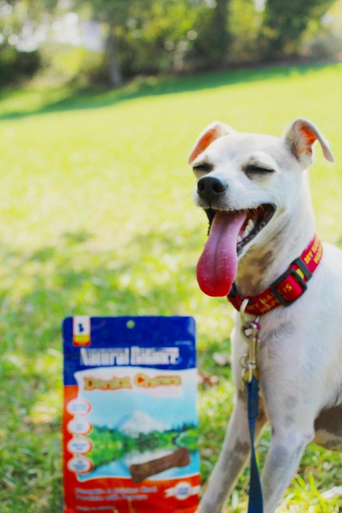 Natural Instinct Dog Food Coupon Code