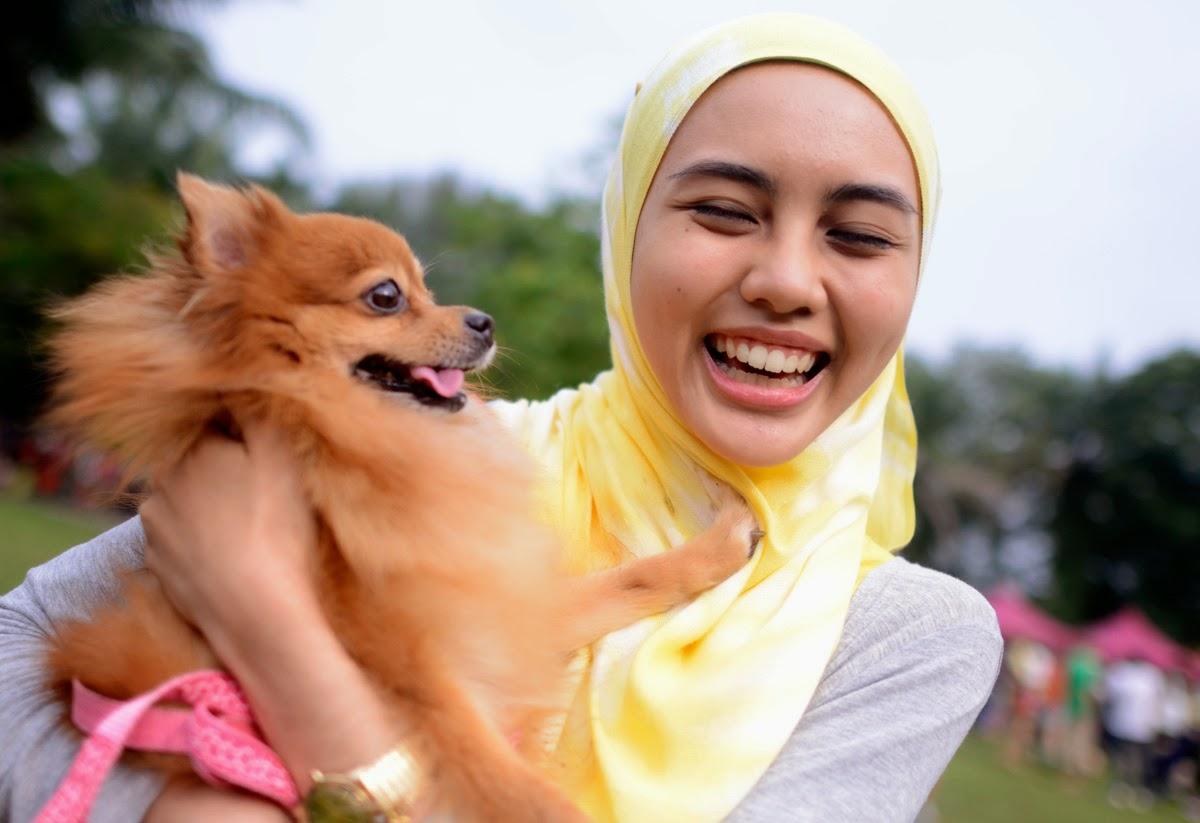 Hukum Menyentuh Anjing