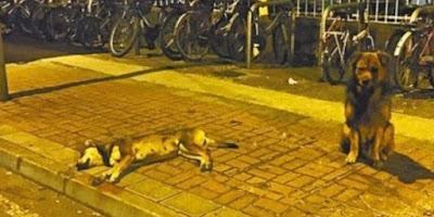Empat Kisah Anjing Paling Setia di Dunia
