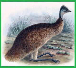 emu tasmania