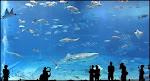 ACUARIO KUROSHIO SEA
