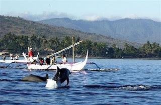 dolphin in lovina beach, lovina beach, snorkeling in lovina beach