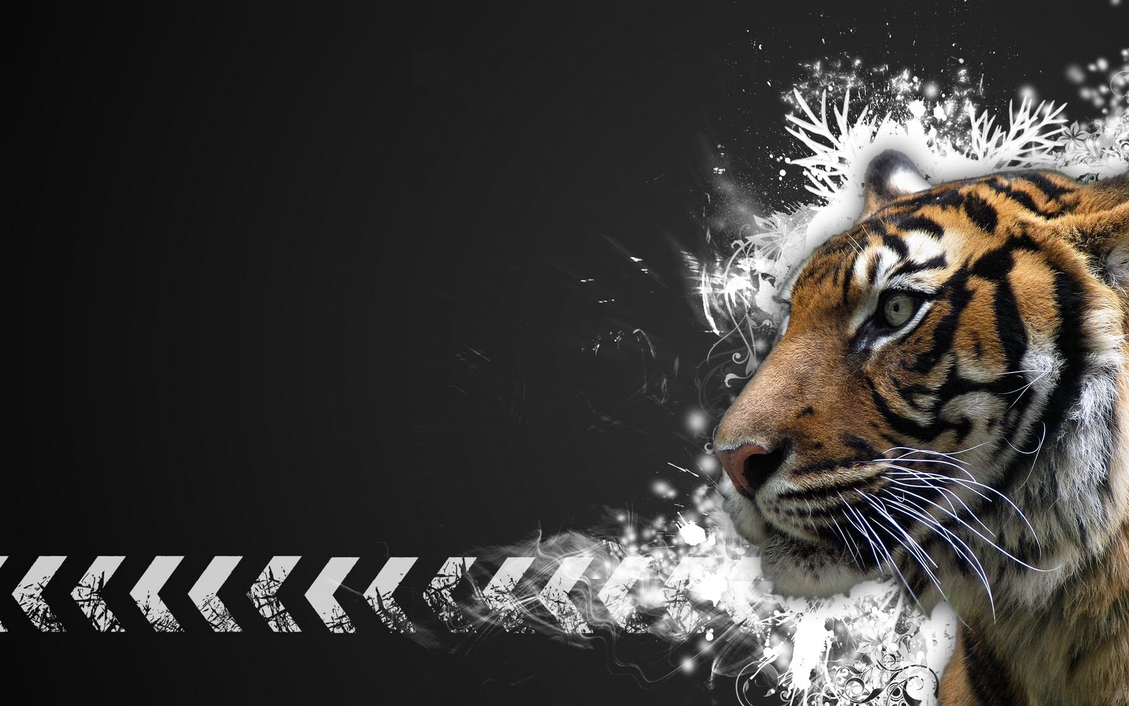 tiger wallpapers hd Tiger Vector Widescreen HD Wallpaper Vektör ve