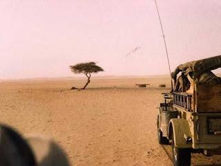 Η ιστορία του πιο μοναχικού δέντρου στον κόσμο…