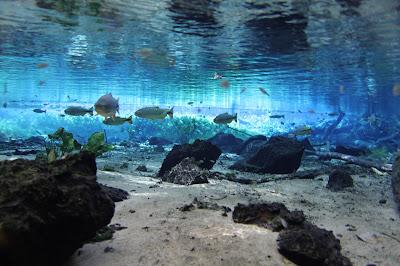 Àgua transparente na nascente do Rio Baía Bonita